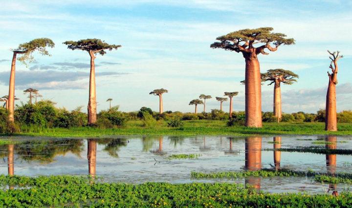 Baobá-Viaje-com-a-Mix